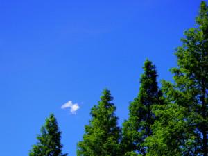 夏の木立と青い空